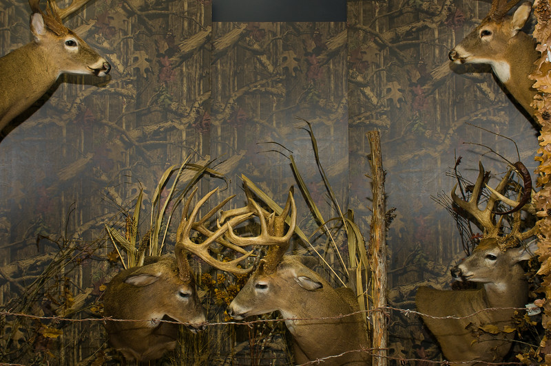 20141119_010a_Deer-Expo-Pittsfield-IL-AOG_pr1
