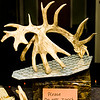 20141119_021a_Deer-Expo-Pittsfield-IL-AOG_pr1
