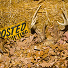 20141119_032a_Deer-Expo-Pittsfield-IL-AOG_pr1