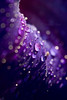 Close up on dew drops.