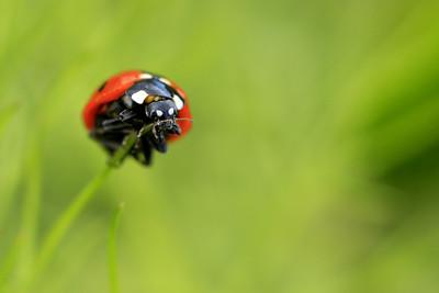 Ladybug - © Simpson Brothers Photography