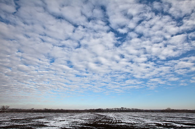 1-13-11  Beautiful, altocumulus clouds moved in quickly. The contrast of the snow on a dark field combined with the amazing blue sky makes this a favorite.