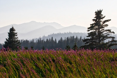 Smoke and fireweed