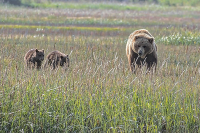 Family outing in the meadow.