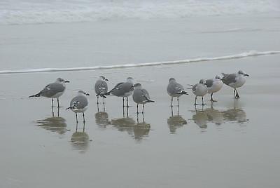 Shore Birds Reflections Tybee Island