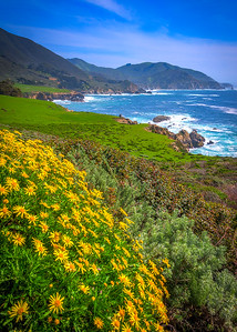 Big Sur Yellow