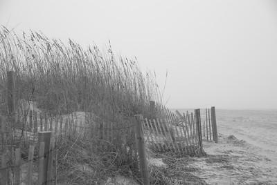 Protected Dunes Tybee Island GA