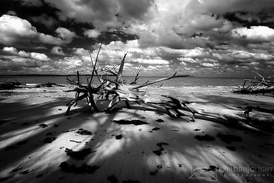 """RADIANCE""Talbot Island, FLDriftwood splits the late afternoon sun on Florida's barrier islands.© Chris Moore - Exploring Light PhotographyPURCHASE A PRINT"