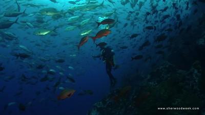 Cocos Island 2020