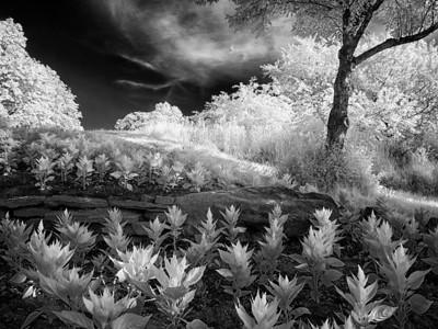 Eerie Garden @ Sam Lawrence Park, Hamilton