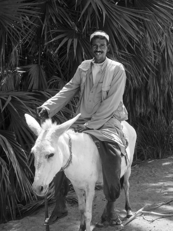A Jolly Eyptian rides a donkey Aswan, Egypt