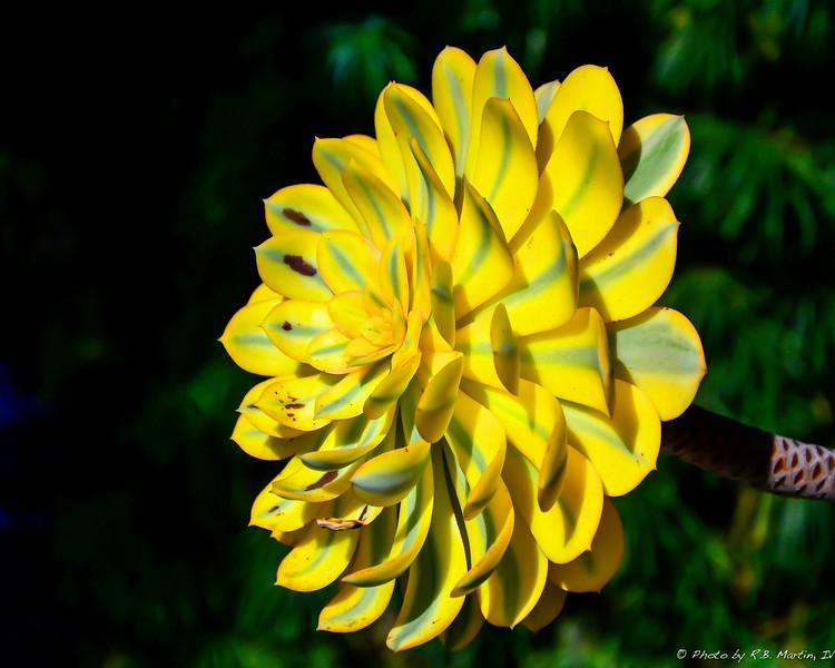 Exotic Flower in California