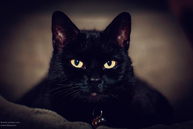 "Female Cat ""Boo"", Newark, DE, 2014"