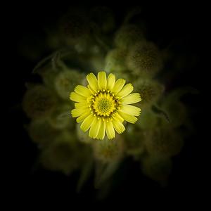 Perdido en el amarillo