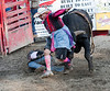 Bull Fighter At Work - Central PA Rodeo, Huntingdon, PA, June 2013