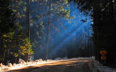 Early morning campfires, Yosemite