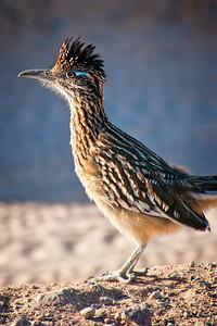 Bird0001