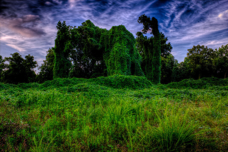 Kudzu (Japanese Arrowroot) Elephant. Unknown to landowners the plant is edible and has Medicinal uses, Animal feed, Basketry. This was taken as the sunset behind me. Used Promote Control set at .3 and 17 shots so +/- 3AV post processed with Photomatix tonemapping.