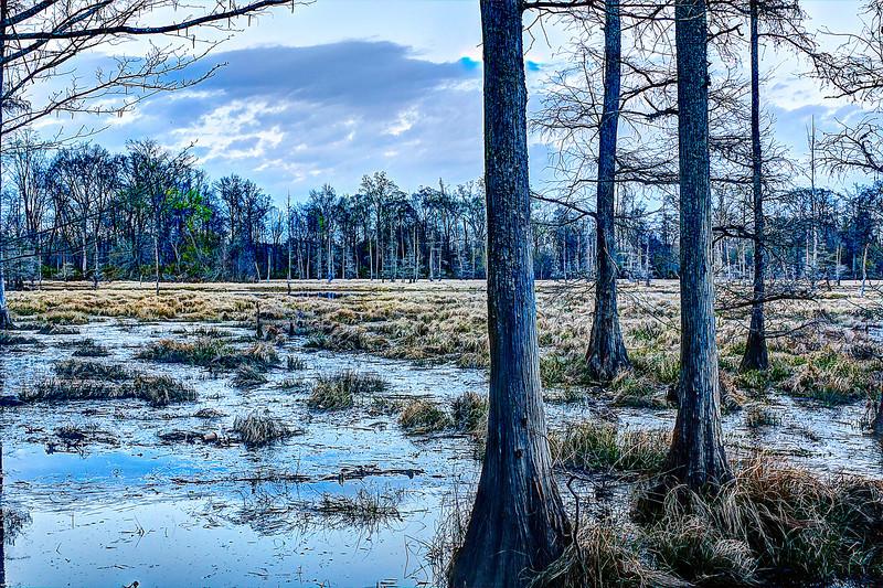 Swamp fused
