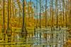Swamp Golden Hour