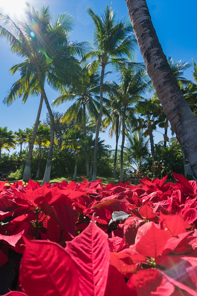 Holidays in Hawaii ©2017 Ranae Keane-Bamsey Photography www.EMotionGalleries.com