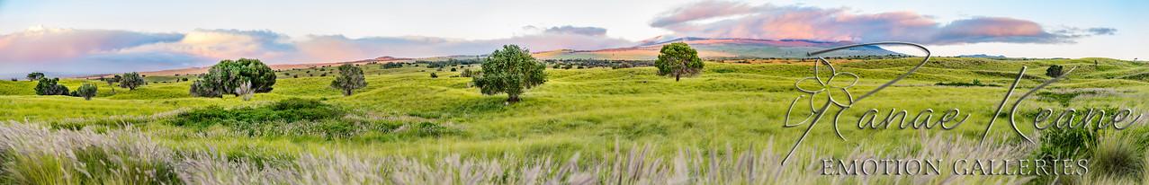 South Kohala Windswept slopes of Mauna Kea Volcano ©2017 Ranae Keane-Bamsey Photography www.EMotionGalleries.com