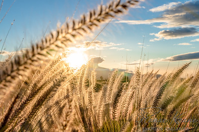 Fountain Grass Framing Sunset over Hualalai Volcano ©2017 Ranae Keane-Bamsey Photography www.EMotionGalleries.com