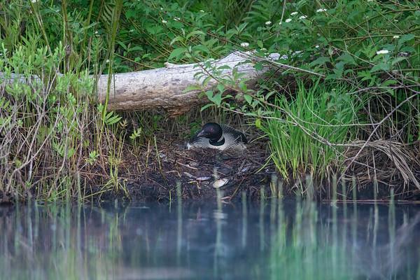 Parc national du Lac Témiscouata