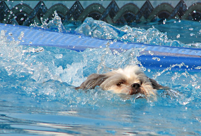 """Doggy Paddle Professional""  Selected Winner 7/29/2007 Category ""Animals:Domesticated and Farm"" PhotographyVoice.com"