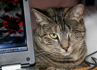 """Seriously, You're Using a Mouse?""  Selected Winner 5/30/2008 Category ""Animals & Wildlife"" PhotographyVoice.com"