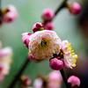 Plum Blossom (pt. 5)
