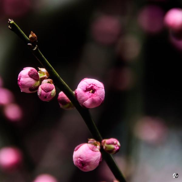 Plum Blossom (pt. 3)