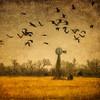 Morning_Flight_Over_Overgrown_Windmill-CranesNE_2014Mar18_2487
