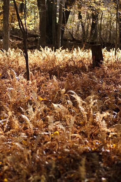 Autumn Ferns<br /> Old Saybrook<br /> Connecticut