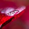 Verão Vermelho