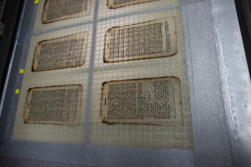 Blätter im Anfaserbecken. Deutlich sieht man die gerade entstandene Umrandung mit frischem Papierbrei.