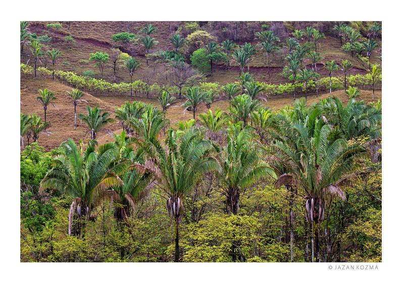 Guanacaste Plantation