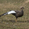Goose Yoga