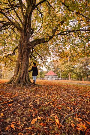 Autumn Afternoons || Tardes de Otoño