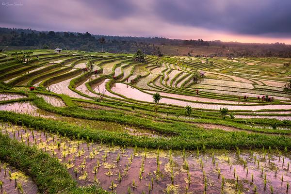 Harvesting Prosperity || Cosechando Prosperidad