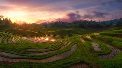 Indonesia rice fields 7R21175