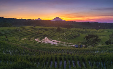 Bali splendid sunrise in the rice fields 7R202535