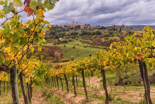 Between Medieval Vineyards || Entre Viñedos Medievales
