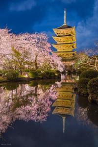 Sakura Nights || Noches de Sakura