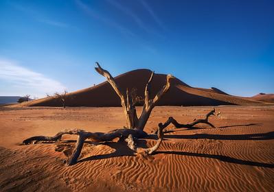 Acacia skeleton and dunes 7R49061
