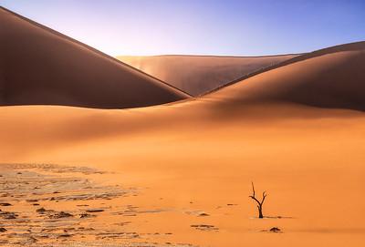 Spirit of the desert 7R49491