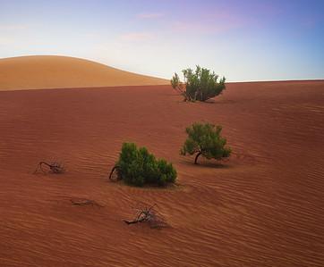 Morning in the Rub Al Khali desert 7R41557