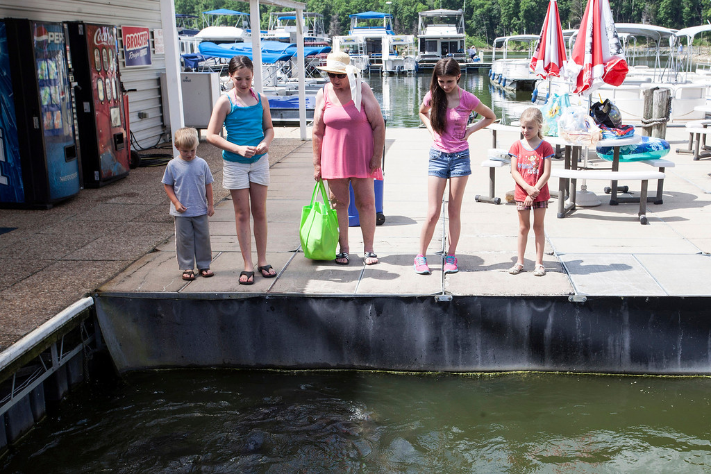 A family stops to check out a school of carp near the docks of the Taylorsville Marina.