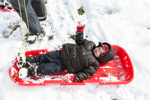 Wild Hopkins prefers to stay on the sled at all times while enjoying the fresh blanket of snow with his family in Cherokee Park on Monday morning. 11/17/14
