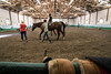 A massive indoor riding area is used for hippotherapy, the use of horses in therapy or rehabilitation, at Green Hill Therapy on Long Run Road in eastern Jefferson County. 9/8/16